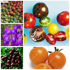 get cheap organic tomato seeds aliexpress alibaba