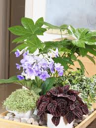 indoor plant display mix and match a plant display hgtv