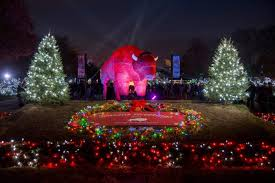 brookfield zoo winter lights brookfield zoo in chicago has over 1 million holiday lights