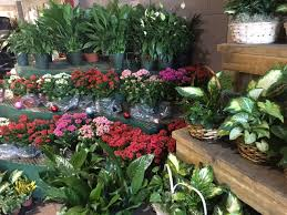 flower wholesale home