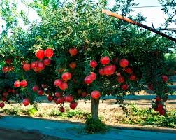 Best Fruit Tree For Backyard 5 Best Tropical Fruits To Grow In Your Backyard Plant Instructions