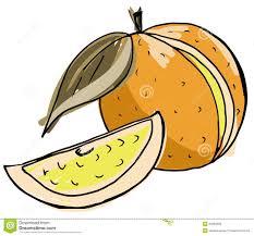 orange half cut circle citrus fruit color sketch stock vector