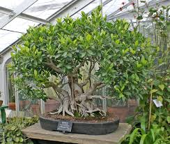 indoor trees plants project idea environmental geography