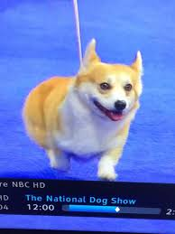 dogs the national show is the best part of thanksgiving