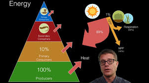 Energy Flow In Plants Concept Map Energy Flow In Ecosystems Youtube