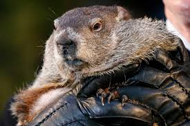 for groundhog day 9 things to know about the mighty marmot
