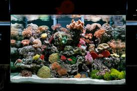 Aquascape Reef How Should I Aquascape My Reef Tank U2014 Practical Fishkeeping Magazine