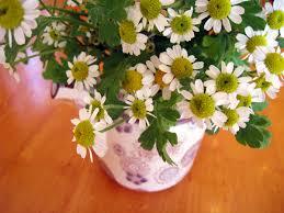 what is spring petal u0026 thorn hi spring