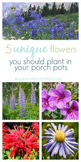 cheap native plants 5 plants for utah porch pots western garden centers