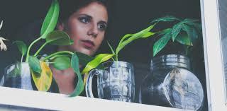 apartment dwellers need indoor plants