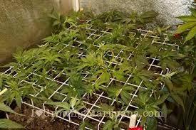 chambre de culture 1m2 eclairage les horticole pour jardins intérieur cannabis