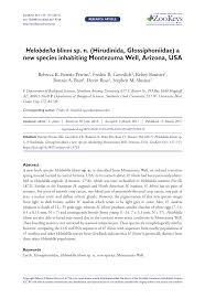 Banister Synonym Helobdella Blinni Sp N Hirudinida Glossiphoniidae A New