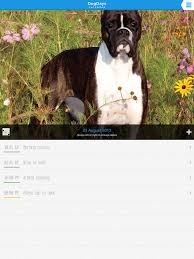 boxer dog 2016 calendar dogdays calendar with dogs and puppies on the app store