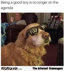 Funny Boy Memes - being a good boy is no longer on the agenda funny dog meme pmslweb