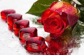 imagenes de amor con rosas animadas imágenes de corazones con frases de amor con movimiento y brillo