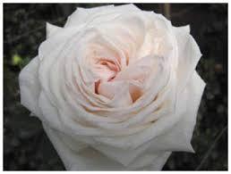 denver flower delivery valentines day flowers delivered in denver calla