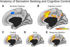 individual differences in cognitive control circuit anatomy link