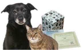 dog cremation pet cremation service galveston county health district