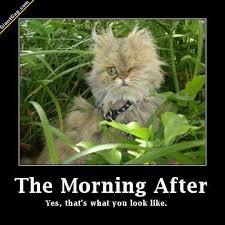 Morning After Meme - morning after funny after best of the funny meme