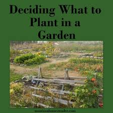 deciding what to plant in a garden montana homesteader
