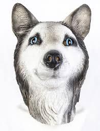 halloween dog mask siberian husky latex mask with closed mouth alaskan malamute wolf