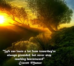 tree teachings everett mamor quote eclectic emily