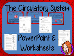blood and the circulatory system powerpoint and worksheets steam