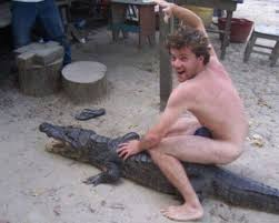 Gator Meme - gators gon gate gator gon get it quickmeme