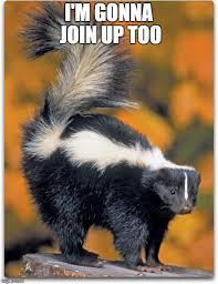 Evil Raccoon Meme - evil raccoon meme blank evil plotting raccoon meme imgflip mtm