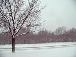snow pine tree free stock photos 15 759 free stock