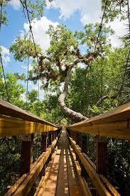Florida nature activities images 187 best sarasota florida activities images jpg