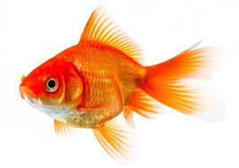aquarium fish sale in jaffna srilanka tetra sithankerney