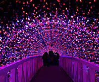 when does the lights at the toledo zoo start tell toledo blog archive the toledo zoo s lights before christmas