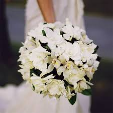 wedding flowers ri best 25 gardenia wedding flowers ideas on gardenia