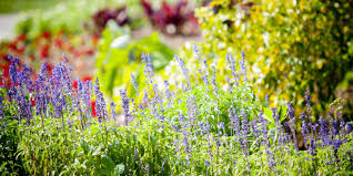 how to grow spring plants best vegetables and flowers to plant
