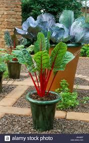 hton court 1997 design naila green ornamental vegetables in