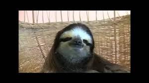 Sloth Meme Rape - sloth raping youtube