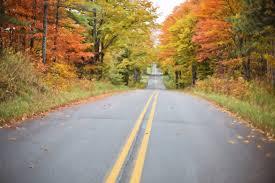 free images tree nature forest morning leaf asphalt orange