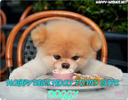 Birthday Meme Dog - happy birthday wishes for dog quotes images memes happy wishes