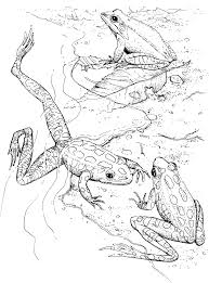 free printable frog coloring pages for kids poison dart frog