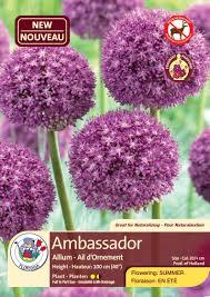 allium ambassador bulbs 1 pk crgardencentre com
