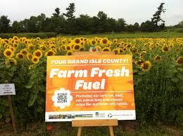 sunflowers archives vt bioenergy connects local farming energy