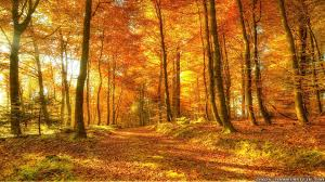woods background images 30 wallpapers u2013 adorable wallpapers