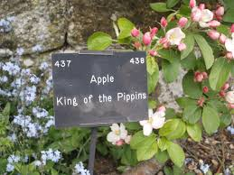 garden shaftesbury abbey museum u0026 gardens