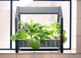 ikea moves into indoor gardening with hydroponic kit indoor