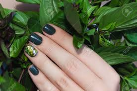 basil in female hand with beautiful dark green nail design stock