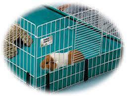 Cages For Guinea Pigs Midwest Homes For Pets Guinea Pig Habitat Plus U0026 Reviews Wayfair