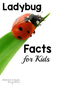 ladybug facts for kids preschool inspirations