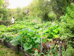 permaculture vegetable garden layout permaculture vegetable
