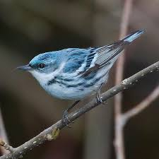North Carolina birds images Data shows north carolina 39 s birds will see climate change impacts jpg